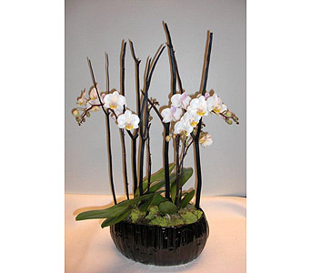 Bamboo Orchids in Victoria BC, Fine Floral Designs
