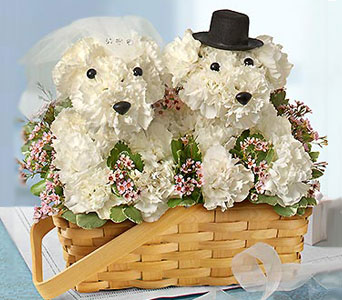 Bride and Groom Flower Doggies in Fairfax VA, Greensleeves Florist
