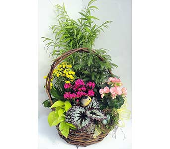 Natures Delight in Naples FL, Driftwood Garden Center & Florist