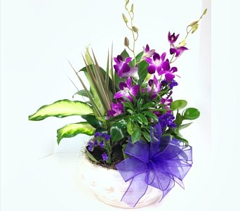 DISH GARDEN WITH PURPLE ORCHIDS in Arlington VA, Twin Towers Florist