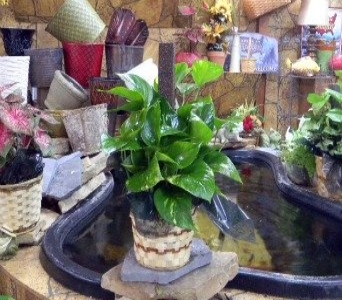 Philodendron pole plant in Camden AR, Camden Flower Shop