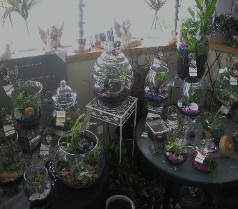 terrariums1 in Kennewick WA, Shelby's Floral