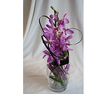 Orchid Beauty in Victoria BC, Fine Floral Designs