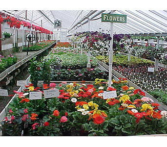 Greenhouse in Somerset PA, Somerset Floral