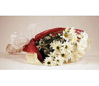 White-Daises in San Clemente CA, Beach City Florist