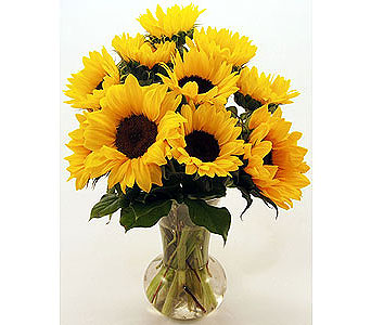 One-Dozen-Yellow-Rayed-Sunflowers in San Clemente CA, Beach City Florist