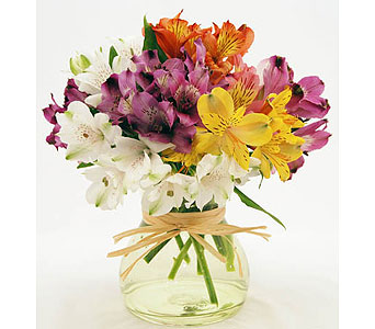 Mixed-Colorful-Alstroemeria-Red-White-Pink-Yellow-and-Purple in San Clemente CA, Beach City Florist