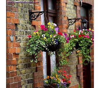 Hanging-baskets in Ellwood City PA, Posies By Patti