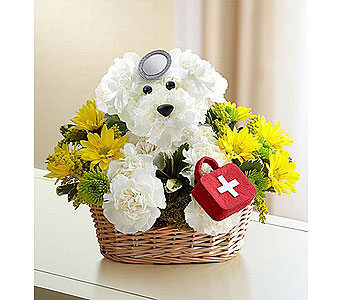 Doggie Howser M.D. in Bradenton FL, Ms. Scarlett's Flowers & Gifts