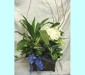 Basket Garden 109 in Lake Forest CA, Cheers Floral Creations