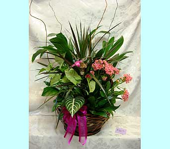 Basket Garden 121 in Lake Forest CA, Cheers Floral Creations