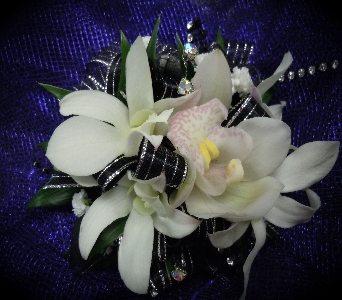 Black & White Orchid in Sacramento CA, Arden Park Florist & Gift Gallery