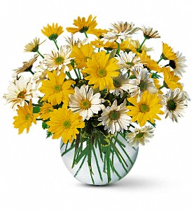 Dashing Daisies in Bonita Springs FL, Occasions of Naples, Inc.