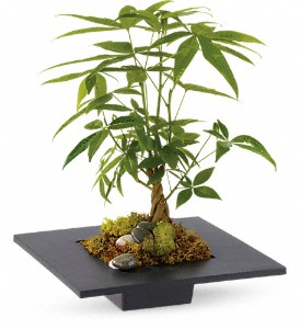 Money Tree in Sioux Falls SD, Country Garden Flower-N-Gift
