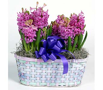 Hyacinth Basket in Southampton PA, Domenic Graziano Flowers