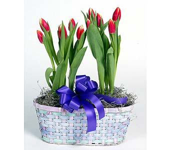 Tulip Basket in Southampton PA, Domenic Graziano Flowers