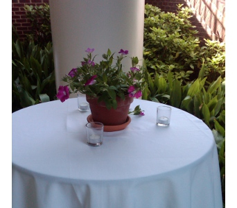 Potted Petunia Centerpiece in Raleigh NC, North Raleigh Florist
