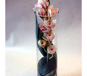 Cylinder of Cymbidiums in Victoria BC, Fine Floral Designs