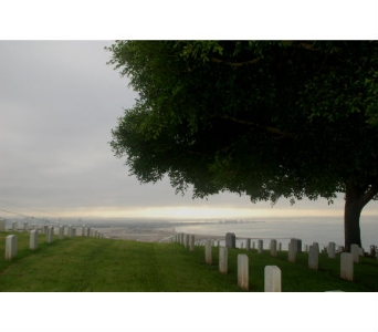 FORT ROSECRANS CEMETERY in San Diego CA, Flowers Of Point Loma