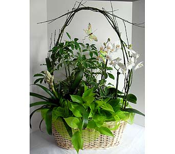 Orchid Bromelaid Basket in Crafton PA, Sisters Floral Designs