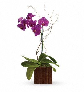 Teleflora's Bamboo Elegance in Chicago IL, Wall's Flower Shop, Inc.