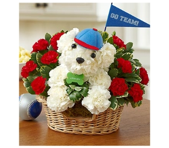 Sports Hound in Bradenton FL, Ms. Scarlett's Flowers & Gifts