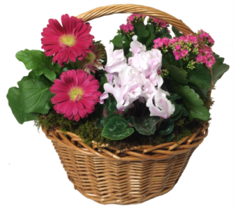 Beautiful Blooms Basket in Little Rock AR, Tipton & Hurst, Inc.