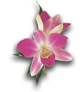 Purple Dendrobium Boutonniere in Bend OR, All Occasion Flowers & Gifts