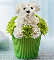 Pup-cake in bloom in Chambersburg PA, All Occasion Florist