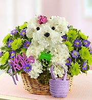 Mama Paws in Chambersburg PA, All Occasion Florist
