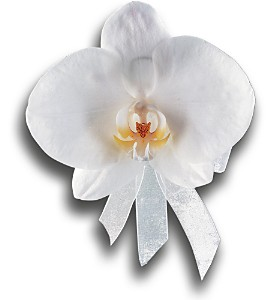 White Phalaenopsis Corsage in Orlando FL, Harry's Famous Flowers