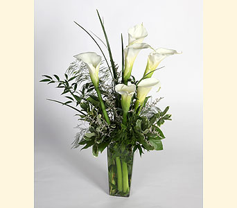 Callas in Southampton PA, Domenic Graziano Flowers