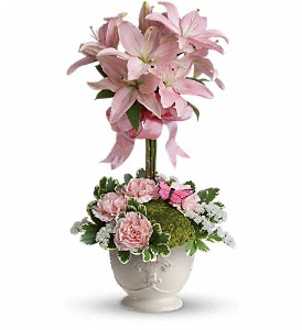 Teleflora's Blushing Lilies in Hollister CA, Barone's Westlakes Balloons and Gifts