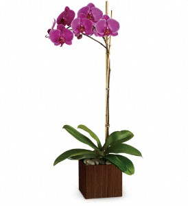 Teleflora's Sublime Orchid in Gaithersburg MD, Flowers World Wide Floral Designs Magellans