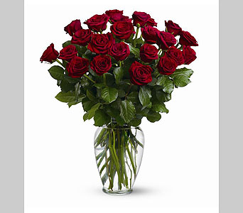 Two Dozen Red Roses in Tarpon Springs FL, Kikilis Florist