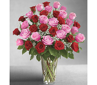 Ultimate Elegance- 36 Long Stem Pink & Red Roses in Indianapolis IN, George Thomas Florist