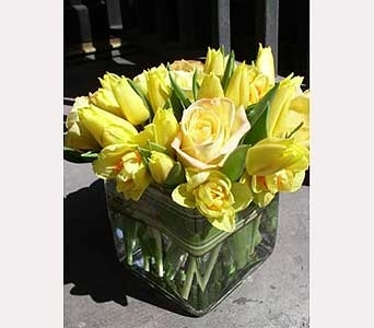 Rosy Tulip Arrangement in Houston TX, River Oaks Flower House, Inc.