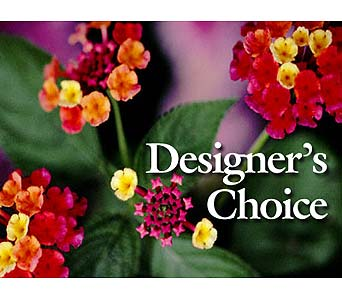 Designer's Choice in Tampa FL, Buds, Blooms & Beyond