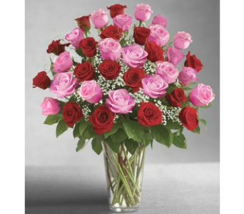 Ultimate Elegance 36 Long Stem Pink & Red Roses in Palm Desert CA, Milan's Flowers & Gifts