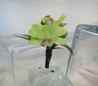 Green Dendrobium Orchids with Red Lip in Greenville SC, Expressions Unlimited