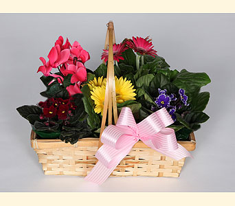Blooming Plant Basket in Southampton PA, Domenic Graziano Flowers