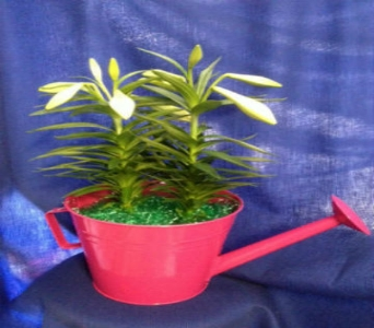 Watering Can Easter Lily in Kimberly WI, Robinson Florist & Greenhouses