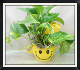 Smiley Face with Ivy Plant in Tyler TX, The Flower Box