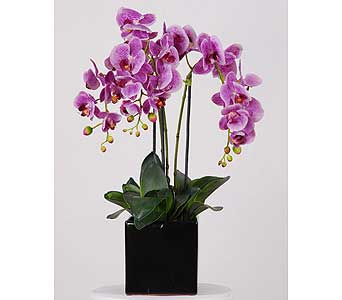 Pink Orchid Box in Bellevue WA, CITY FLOWERS, INC.