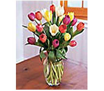 Timeless Tulips in San Antonio TX, Allen's Flowers & Gifts