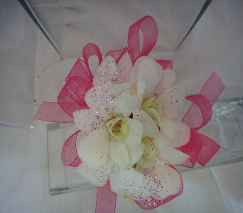White Orchid Accented with pink in Greenville SC, Expressions Unlimited