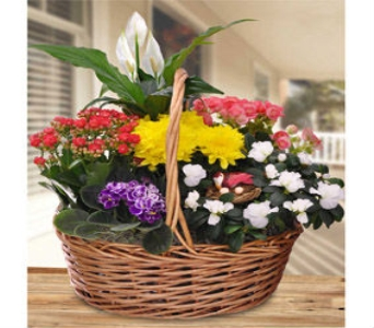 Blooming Garden Basket in East Syracuse NY, Whistlestop Florist Inc