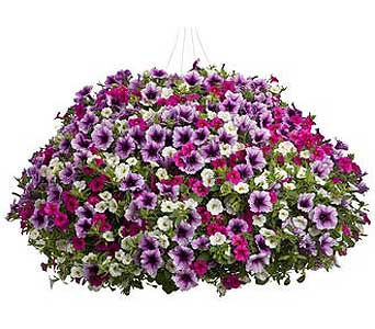 Hanging Basket 10 in Owego NY, Ye Olde Country Florist
