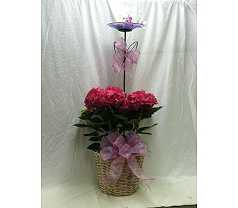 Mother's Day Special in Wake Forest NC, Wake Forest Florist