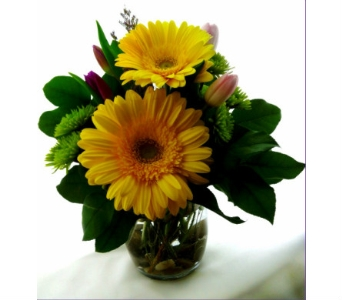 Yellow Gerbera in Oval in Winnipeg MB, Freshcut Downtown